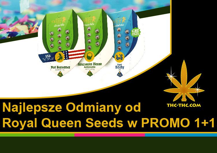 wszystkie automaty, royal queen seeds, promo 1+1