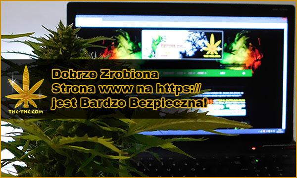 nasiona marihuany, bezpieczne, zakupy