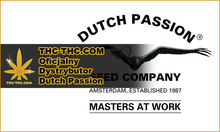 dutch passion, producent, oficjalny dystrybutor, nasiona marihuany, nasiona konopi