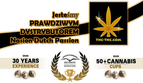 nasiona marihuany, nasiona konopi, dystrybutor, dutch passion