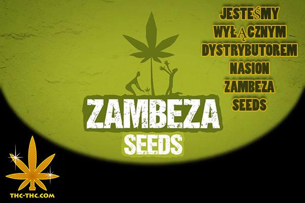 Nasiona Marihuany, Nasiona Konopi, Zambeza Seeds