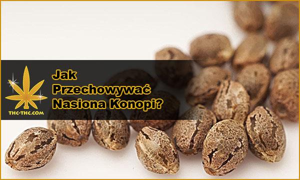 nasiona marihuany, konopi, jak przechowywać