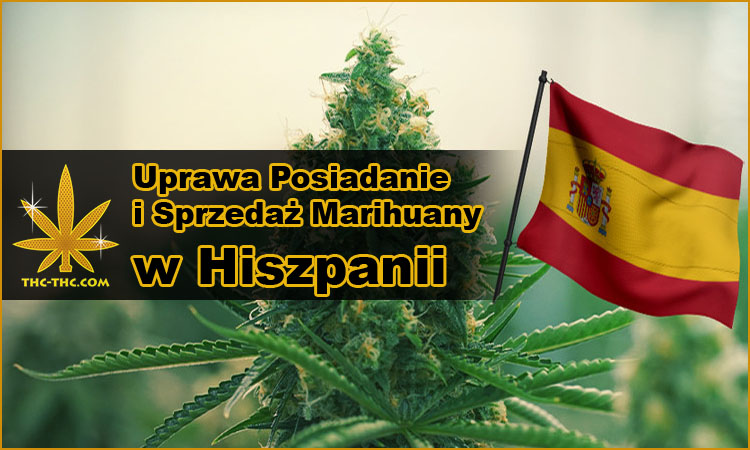 Hiszpania, uprawa, hodowla, posiadanie, sprzedaż, marihuany, konopi, cannabis