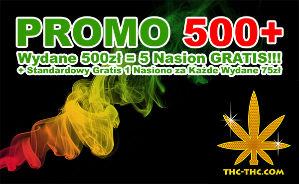 nasiona marihuany, nasiona konopi, promocja, 500 plus