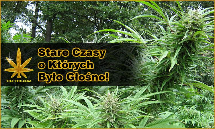 najlepszy sklep z nasionami marihuany, konopi, seedbank