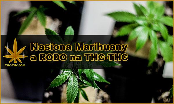 nasiona marihuany, konopi, RODO, THC-THC