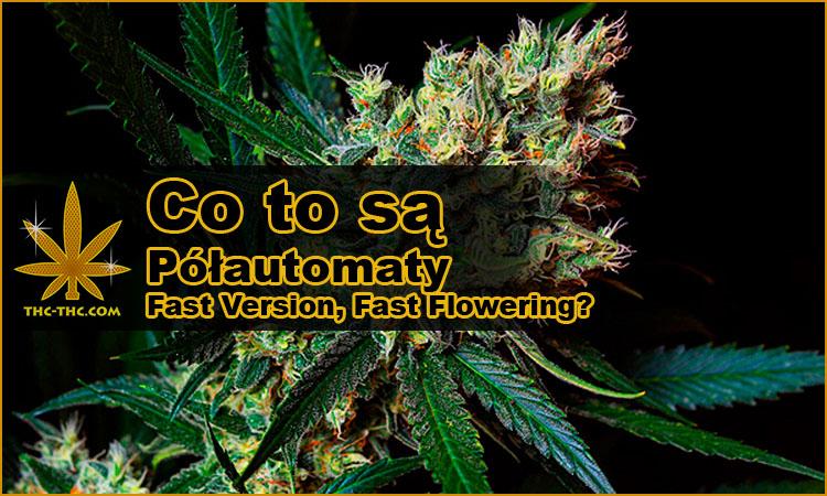 nasiona marihuany, nasiona konopi, półautomaty, półautomatyczne, fast version, fast flowering