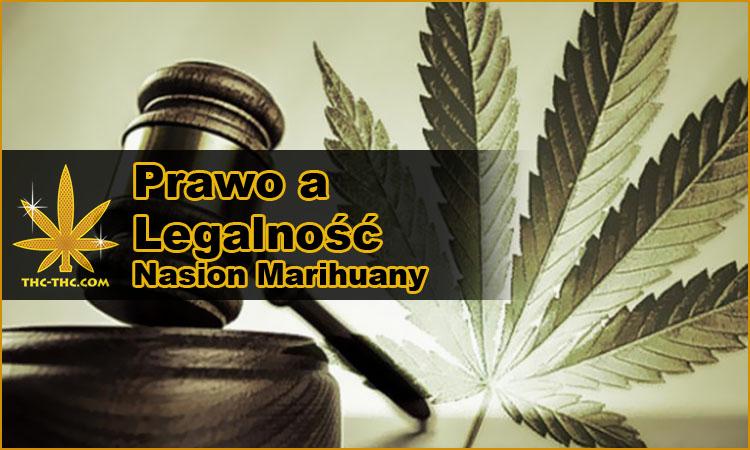 nasiona marihuany, konopi, legalność, prawo