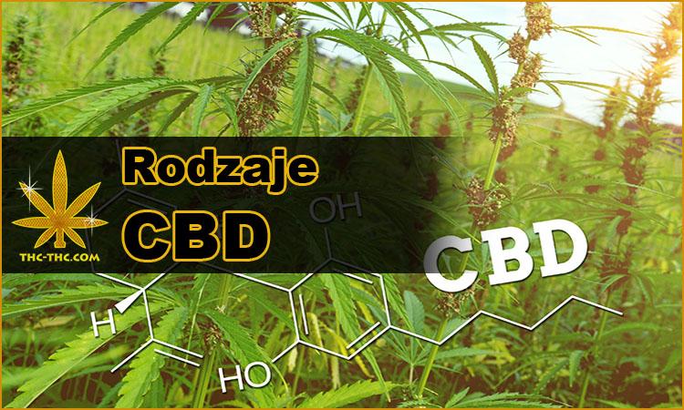 cbd, konopi przemysłowej, cannabisu, konopi indyjskiej, rodzaje, różnice