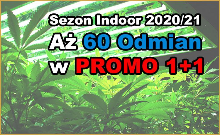 sezon, indoor, 60 odmian konopi, promo 1+1, nasiona marihuany 1+1