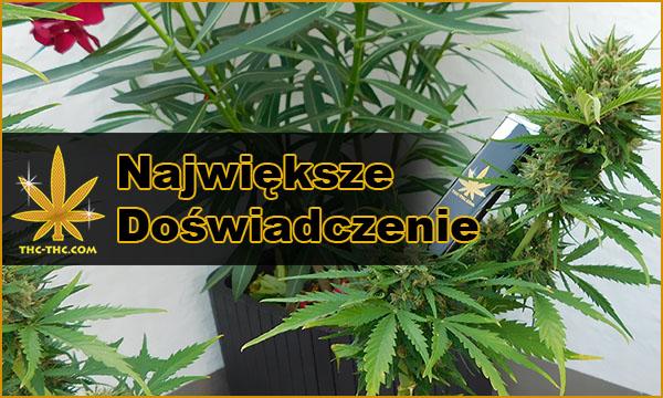 sklep z nasionami marihuany, konopi, thc-thc