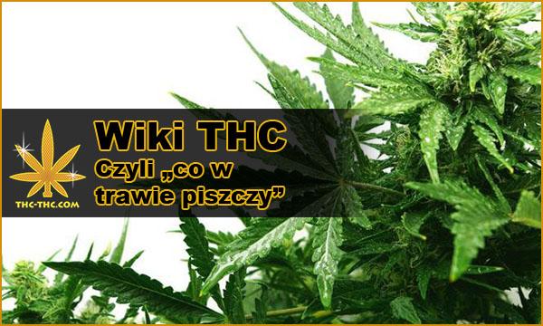 informacje, artykuły, nasionach marihuany, konopi indyjskich, medycznej marihuanie, thc, cbd