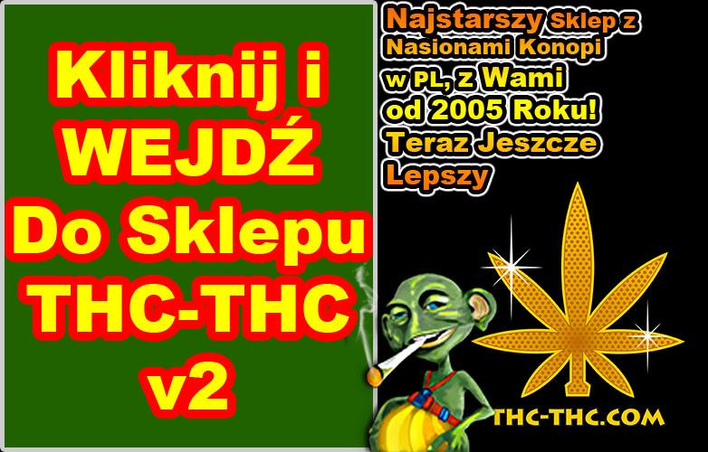 nasiona marihuany, konopi, thc-thc, v2