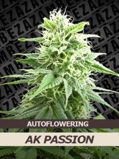 Ak Passion Automatic Feminizowane, Nasiona Marihuany, Konopi, Cannabis