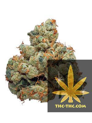 Auto Amnesia XXL Feminizowane, Nasiona Marihuany, Konopi, Cannabis
