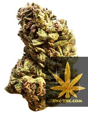 Auto Diesel Ryder Feminizowane, Nasiona Marihuany, Konopi, Cannabis