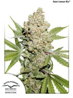 Auto Lemon Kix Feminizowane, Nasiona Marihuany, Konopi, Cannabis