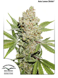 Auto Lemon Zkittle Feminizowane, Nasiona Marihuany, Konopi, Cannabis