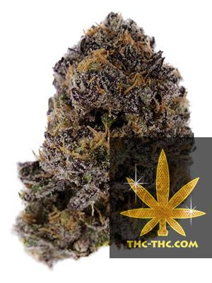 Auto Purple XXL Feminizowane, Nasiona Marihuany, Konopi, Cannabis