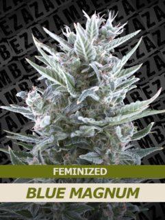 Blue Magnum Feminizowane, Nasiona Marihuany, Konopi, Cannabis