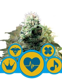 CBD Mix Feminizowane - Royal Queen Seeds, Nasiona Marihuany, Konopi, Cannabis