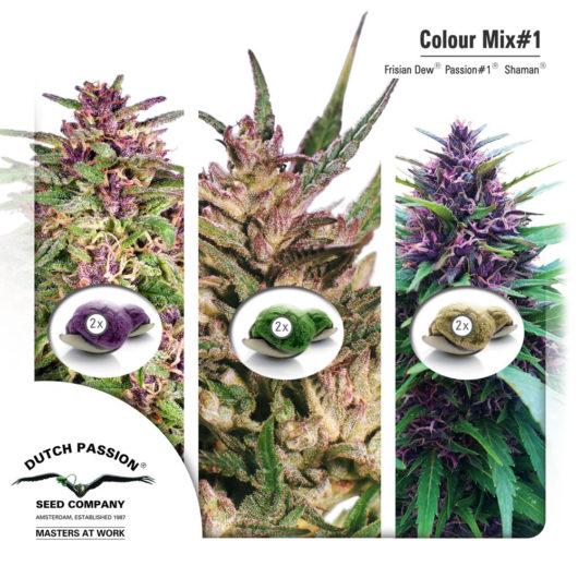 Colour Mix1 - Dutch Passion, Nasiona Marihuany, Konopi, Cannabis
