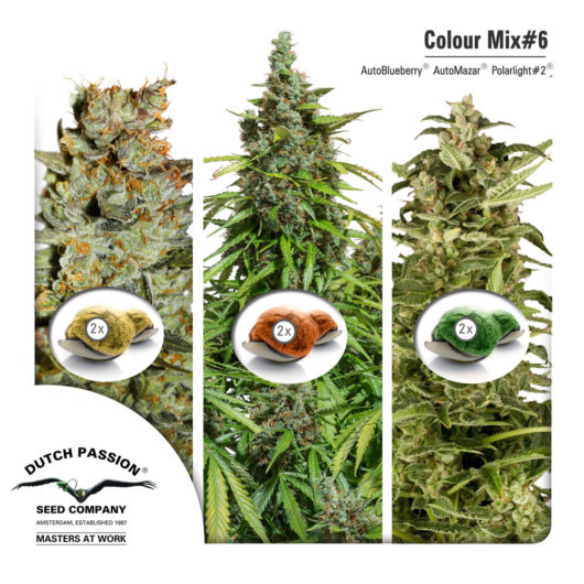 Colour Mix6 - Dutch Passion, Nasiona Marihuany, Konopi, Cannabis