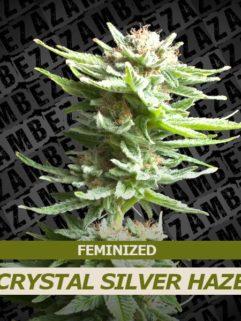Crystal Silver Haze Feminizowane, Nasiona Marihuany, Konopi, Cannabis