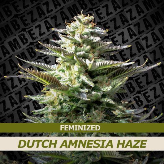 Dutch Amnesia Haze Feminizowane, Nasiona Marihuany, Konopi, Cannabis
