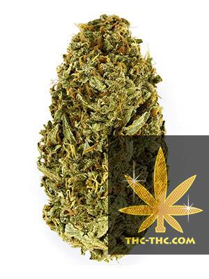 Early Pearl Feminizowane, Nasiona Marihuany, Konopi, Cannabis