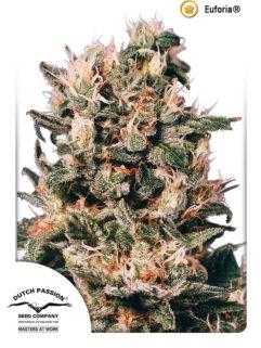 Euforia Feminizowane, Nasiona Marihuany, Konopi, Cannabis