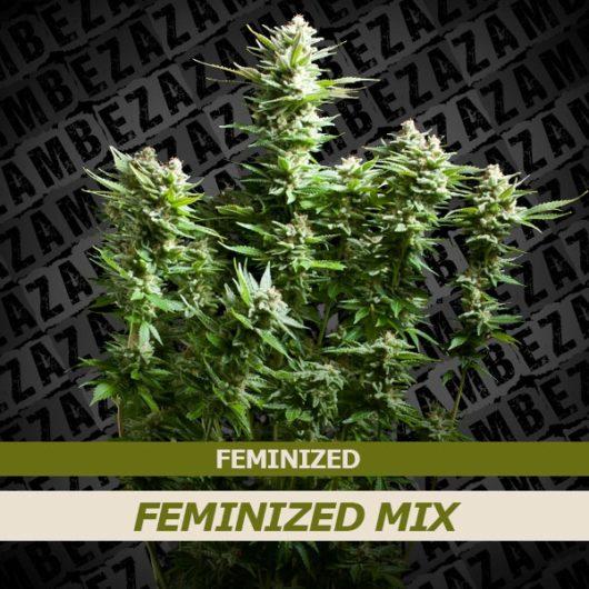 Feminized Mix 10szt - Zambeza Seeds, Nasiona Marihuany, Konopi, Cannabis