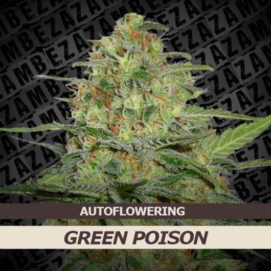 Green Poison Automatic Feminizowane, Nasiona Marihuany, Konopi, Cannabis