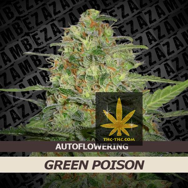 Green Poison Automatic Feminizowane