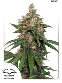 HiFi 4G Feminizowane, Nasiona Marihuany, Konopi, Cannabis