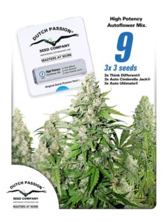High Potency Autoflower Mix Feminizowane 9szt - Dutch Passion, Nasiona Marihuany, Konopi, Cannabis