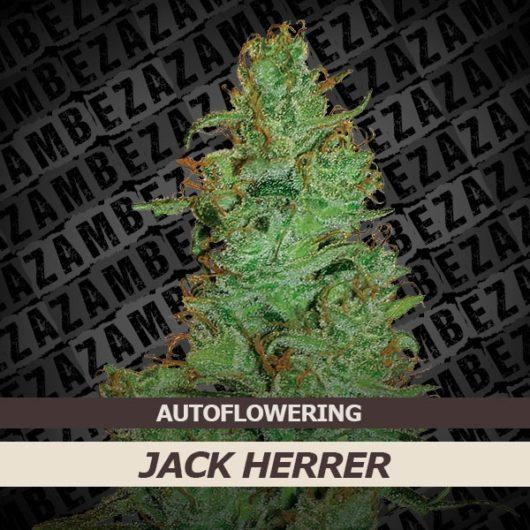 Jack Herer Automatic Feminizowane, Nasiona Marihuany, Konopi, Cannabis