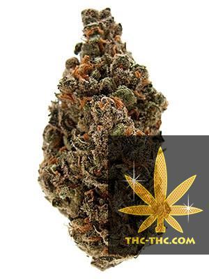 Jack Herer XL Feminizowane, Nasiona Marihuany, Konopi, Cannabis