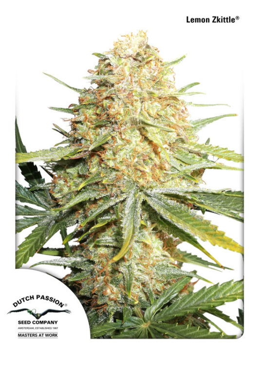Lemon Zkittle Feminizowane, Nasiona Marihuany, Konopi, Cannabis