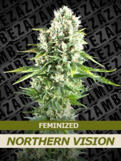 Northern Vision Feminizowane, Nasiona Marihuany, Konopi, Cannabis