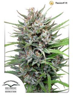 Passion#1 Feminizowane, Nasiona Marihuany, Konopi, Cannabis
