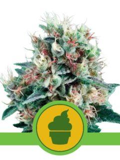 Royal Creamatic Automatic Feminizowane, Nasiona Marihuany, Konopi, Cannabis