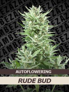 Rude Bud Automatic Feminizowane, Nasiona Marihuany, Konopi, Cannabis