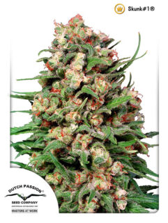 Skunk#1 Regularne, Nasiona Marihuany, Konopi, Cannabis