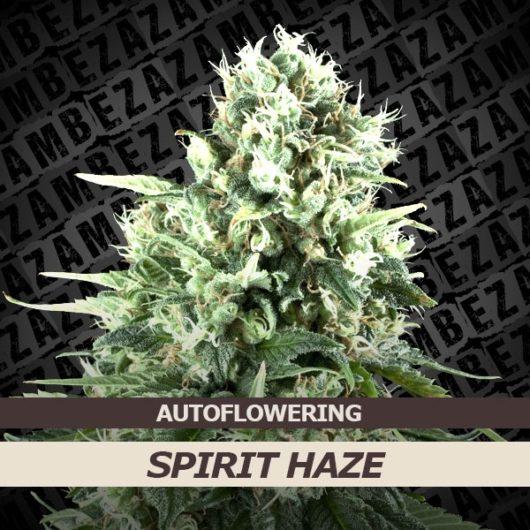 Spirit Haze Automatic Feminizowane, Nasiona Marihuany, Konopi, Cannabis