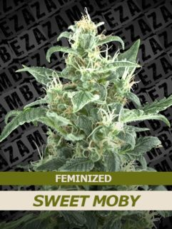Sweet Moby Feminizowane, Nasiona Marihuany, Konopi, Cannabis