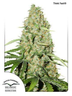 Think Fast Feminizowane, Nasiona Marihuany, Konopi, Cannabis