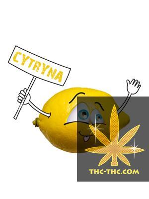 Tytoń do Fajki Wodnej 5pipes Cytryna, Produkt, Sklep