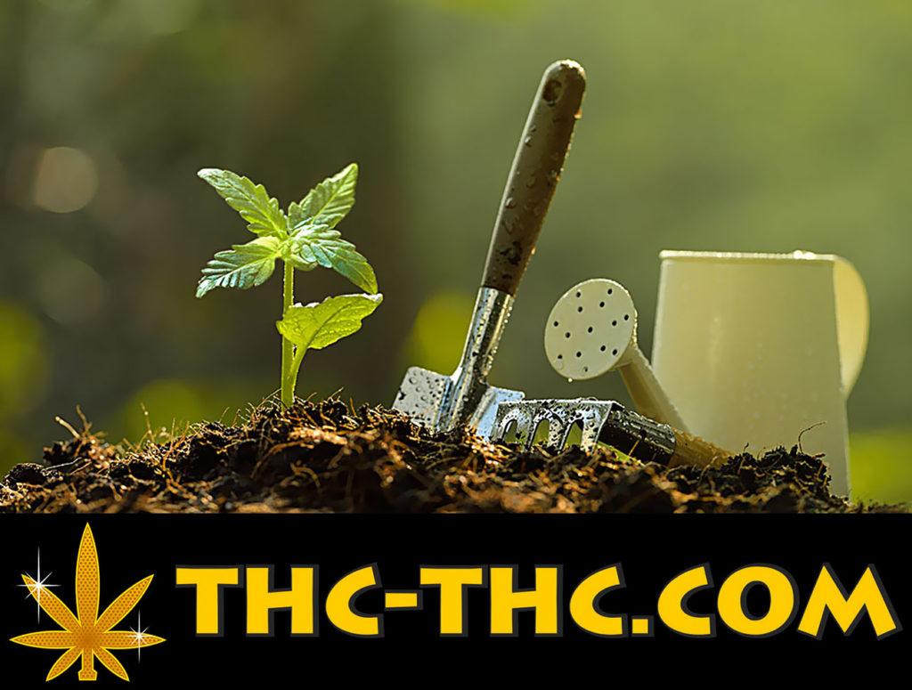 Urządzenie, Uprawy, Konopi, Plantacji, Marihuany, Ziemia, Indoor