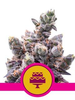 Wedding Gelato Feminizowane, Nasiona Marihuany, Konopi, Cannabis